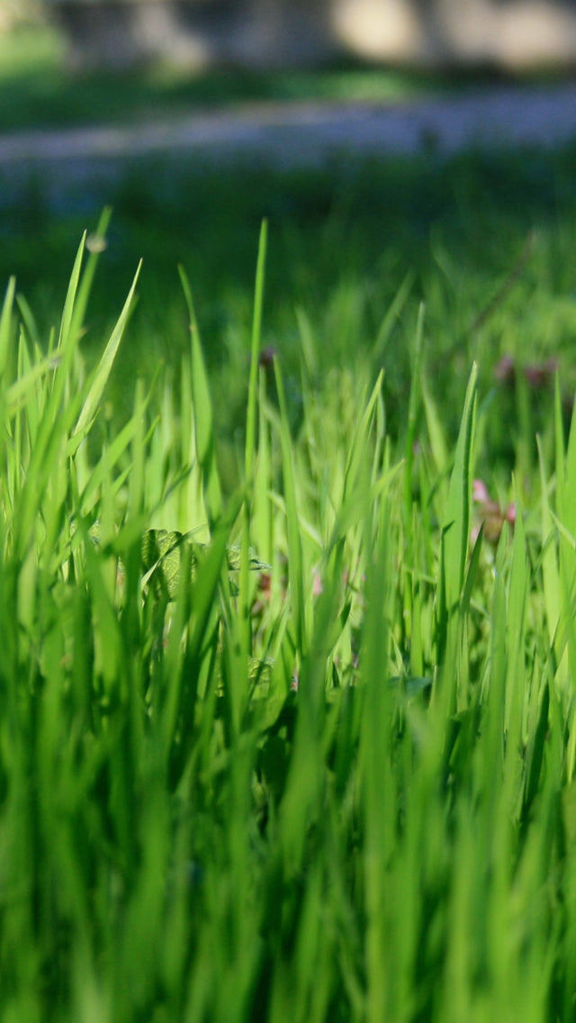 Nature Vitality Grassland Iphone 11 Pro Max Wallpaper