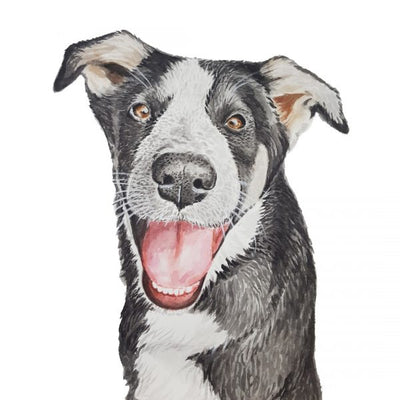 Pet Portraits - For Me By Dee