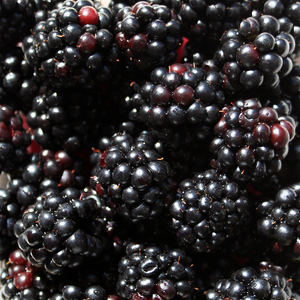 Blackberries, 6 oz. pkg