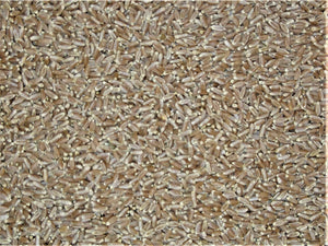 Wheat - Hard Red Table (Wheat Berries)