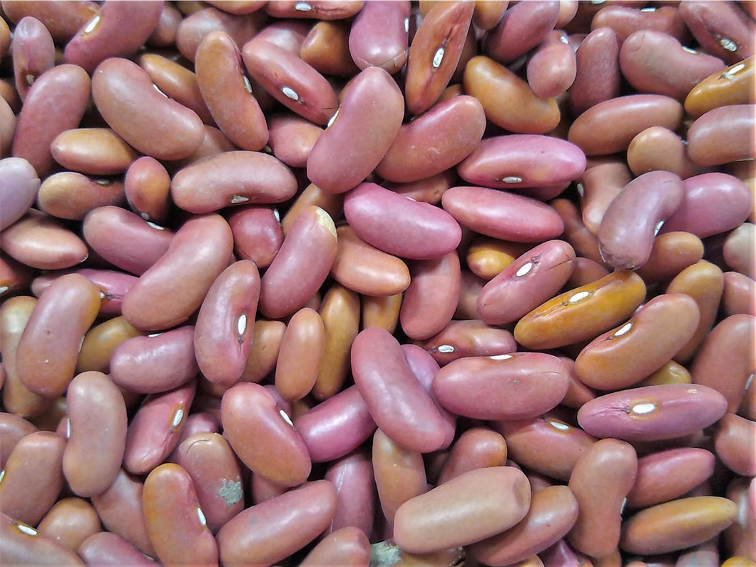 Beans - Kidney - Light Red