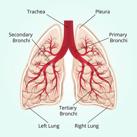 Essential Oil Lung