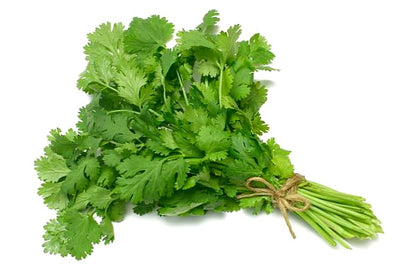 Fresh Cilantro Bunch