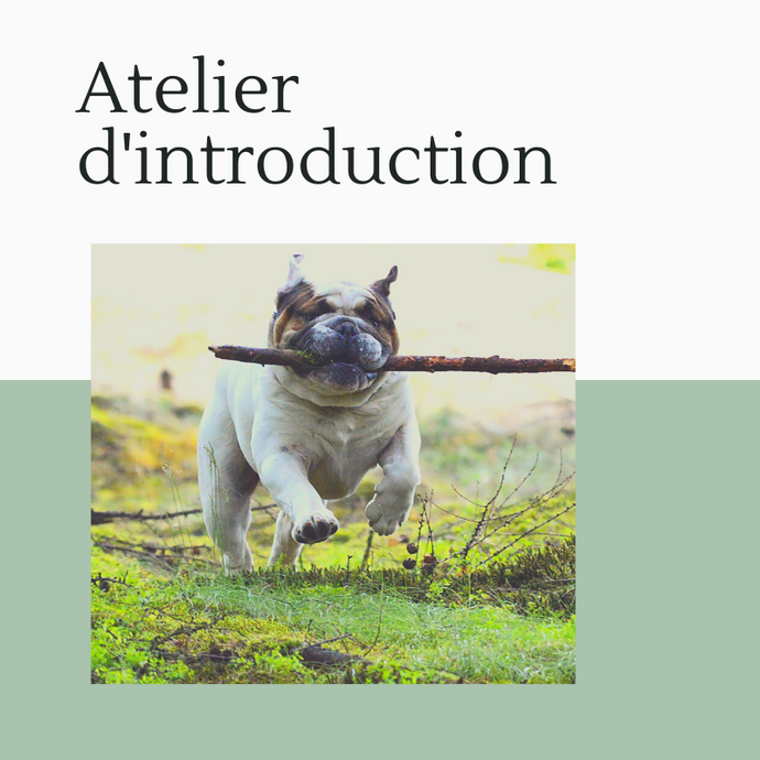Atelier d'introduction au comportement canin