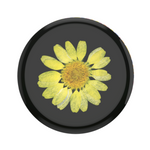 Swappable Pressed Flower Yellow Daisy, PopSockets