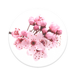 Cherry Blossoms, PopSockets