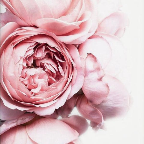 Pink_Peonies_Canvas_Print_close-up_Einhorn_Homewares