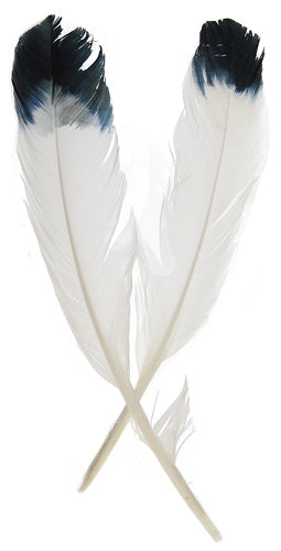 Simulated Eagle Feathers 6pk