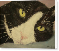 Sissi The Cat 1 - Canvas Print