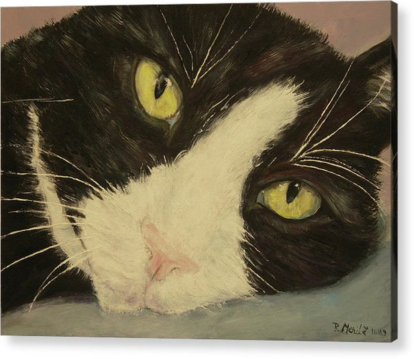 Sissi The Cat 1 - Acrylic Print