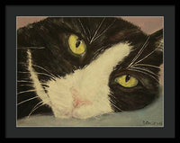 Sissi The Cat 1 - Framed Print