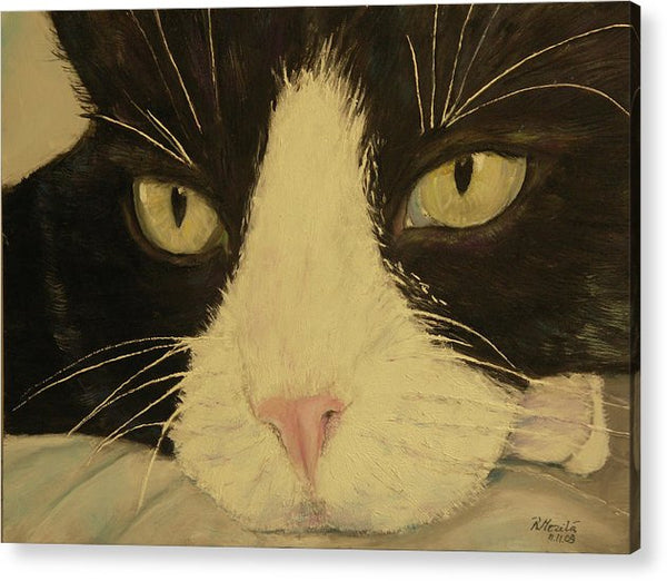 Sissi The Cat 3 - Acrylic Print