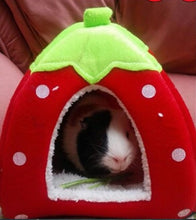 Load image into Gallery viewer, Guinea pig blueberry or Strawberry house