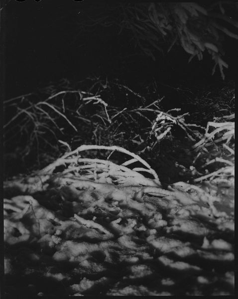 Untitled Branches in Snow