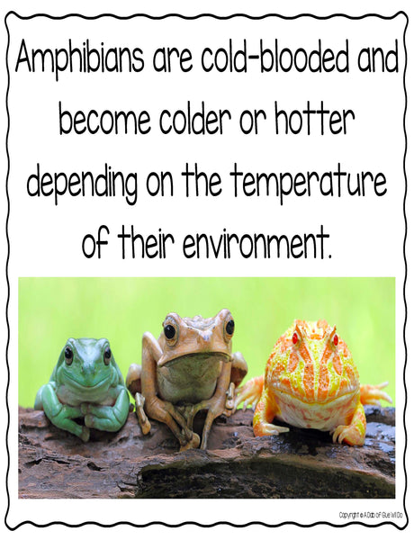 Animal Groups and Animal Classification: Amphibians