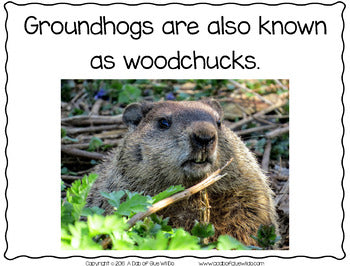Groundhogs: An Animal Study