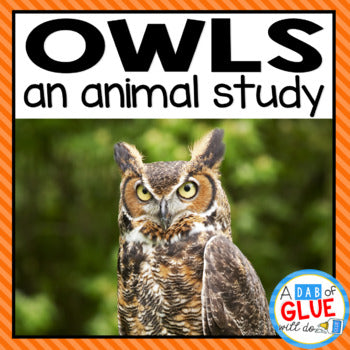 Owls: An Animal Study