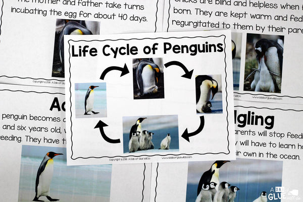 Engage your class in an exciting hands-on experience learning all about penguins! This Penguin Animal Study is perfect for science in Preschool, Pre-K, Kindergarten, First Grade, and Second Grade classrooms and packed full of inviting science activities. Students will learn about the difference between penguins and puffins, animals with and without