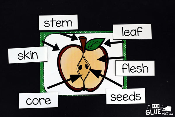 Engage your class in an exciting hands-on experience learning more about the apple! This pack is perfect for science, language arts, and math centers in Kindergarten, First Grade, and Second Grade classrooms and packed full of inviting student activities. Celebrate Fall with apple themed center student worksheets. Students will learn more about app