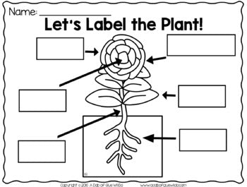 Plants (PowerPoint, Science Lessons, and Printables)