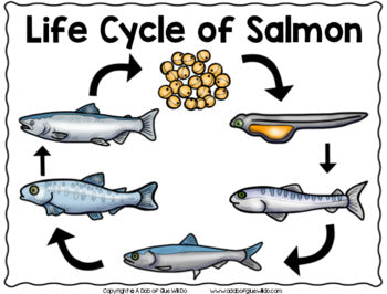Salmon: An Animal Study