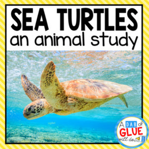 Sea Turtles An Animal Study