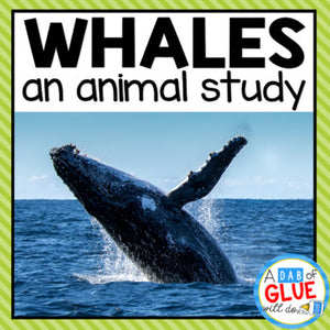 Whales: An Animal Study