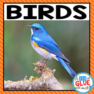 Animal Groups and Animal Classification: Birds