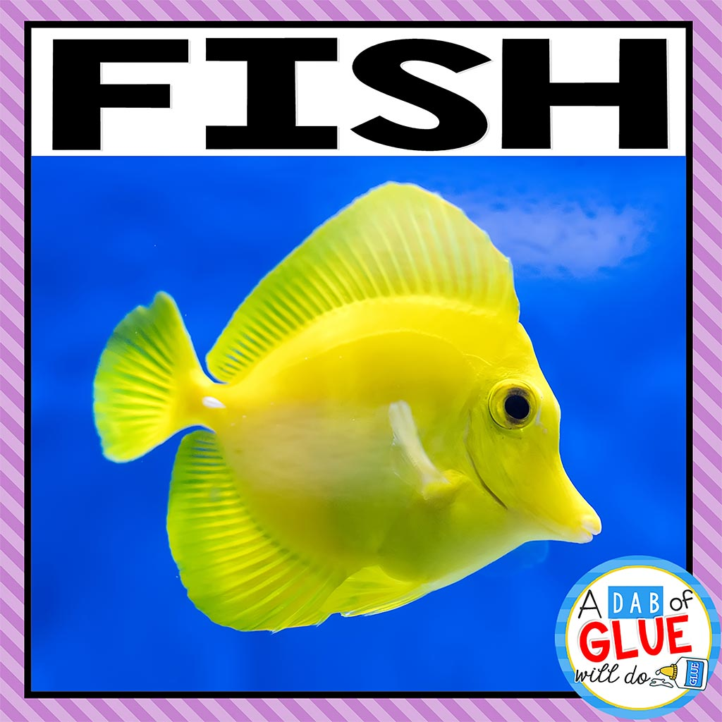Animal Groups and Animal Classification: Fish