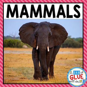 Animal Groups and Animal Classification: Mammals