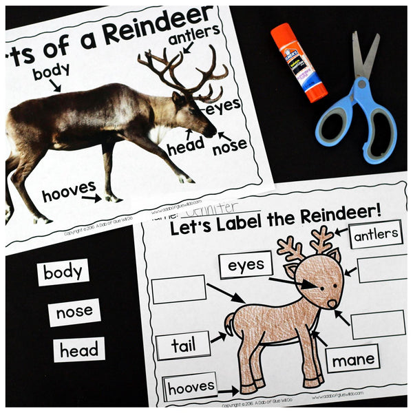 Engage your class in an exciting hands-on experience learning all about reindeer! This Reindeer: An Animal Study is perfect for science in Preschool, Pre-K, Kindergarten, First Grade, and Second Grade classrooms and packed full of inviting science activities. Students will learn about the difference between reindeer and white tail deer, animals tha