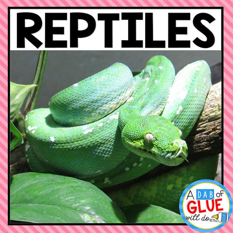Animal Groups and Animal Classification: Reptiles
