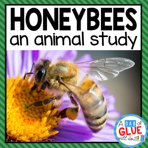 Honey Bees: An Animal Study