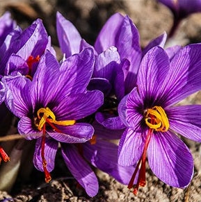 Why You Should Add Saffron to Your Skincare Regimen
