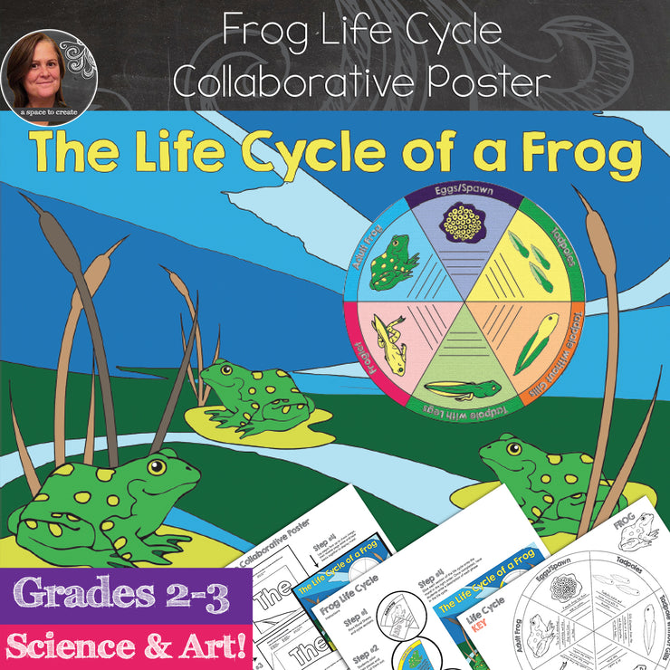 Frog Life Cycle Collaborative Poster and Science Activity