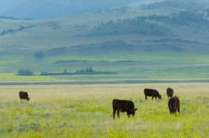 5 Benefits of Grass-Fed Beef