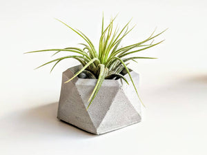 Concrete Geometric Air Plant Holder