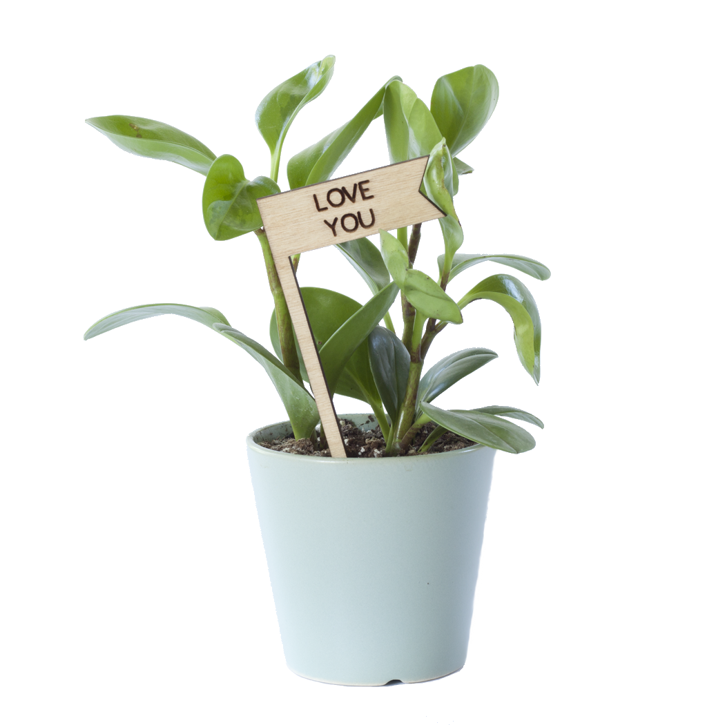 Savvie Studio - Plant Pick - Love You - New Origin Shop