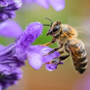 Why Bees Are Important for Your Garden
