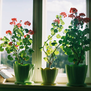 Improve Air Quality with the Right Houseplants