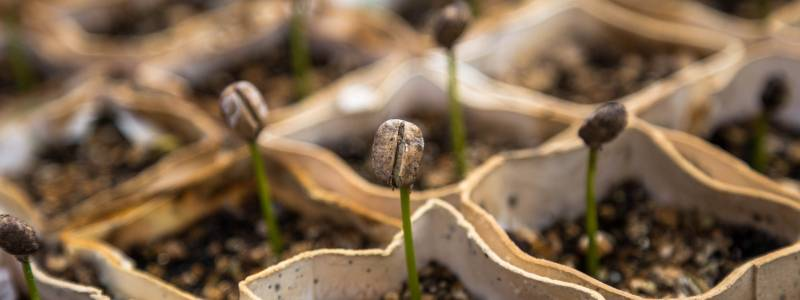 Keep Your Garden Natural How Coffee Grounds Help OnPage
