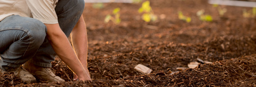 How to Use Plastic Bottes Ecofriendly in Your Garden