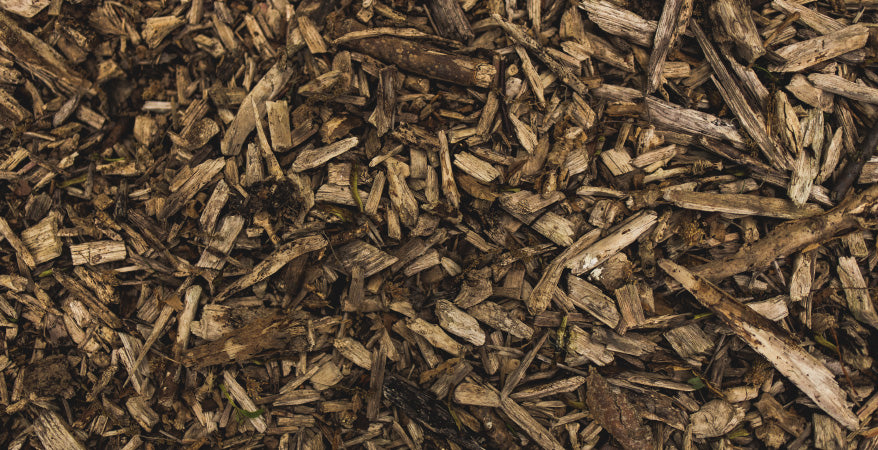 Mulching in Order to Keep Your Tree Healthy