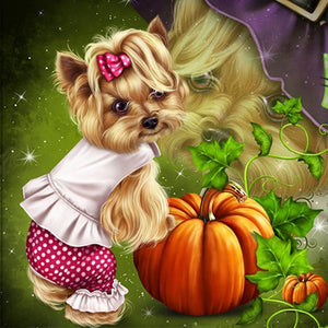 Yorkshire Terrier - Myth Of Asia