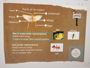 Downloadable Insect Activity cards