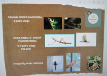Load image into Gallery viewer, Downloadable Insect Activity cards