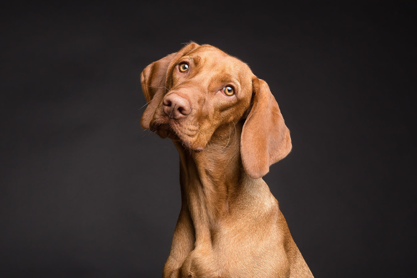 dog with black background
