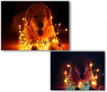 LED christmas lights dog