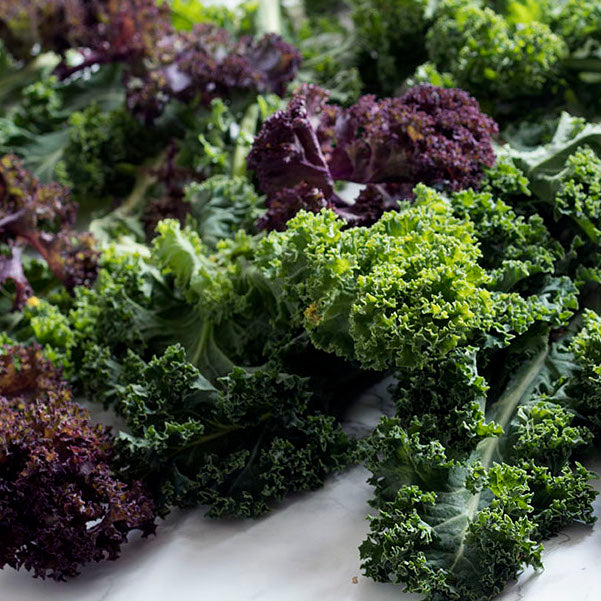 Curly Leaf Kale (Purple and Green Mix)