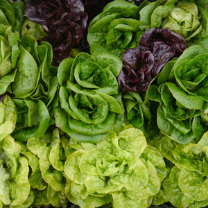 Little Gem Head Lettuce